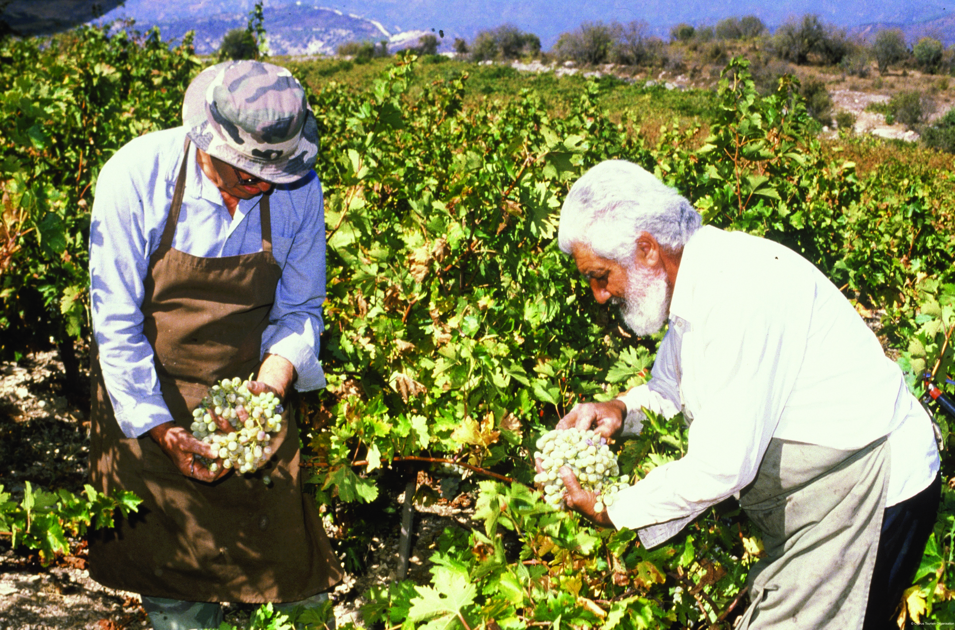 Lemesos: the Home of Great Cyprus Wine